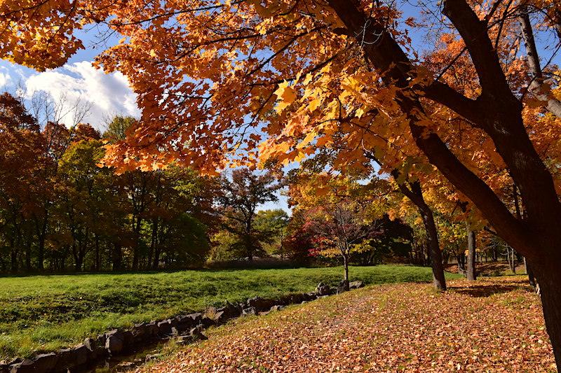 北海道 | 札幌《真駒內公園》探訪深秋限定的絕美賞楓景點