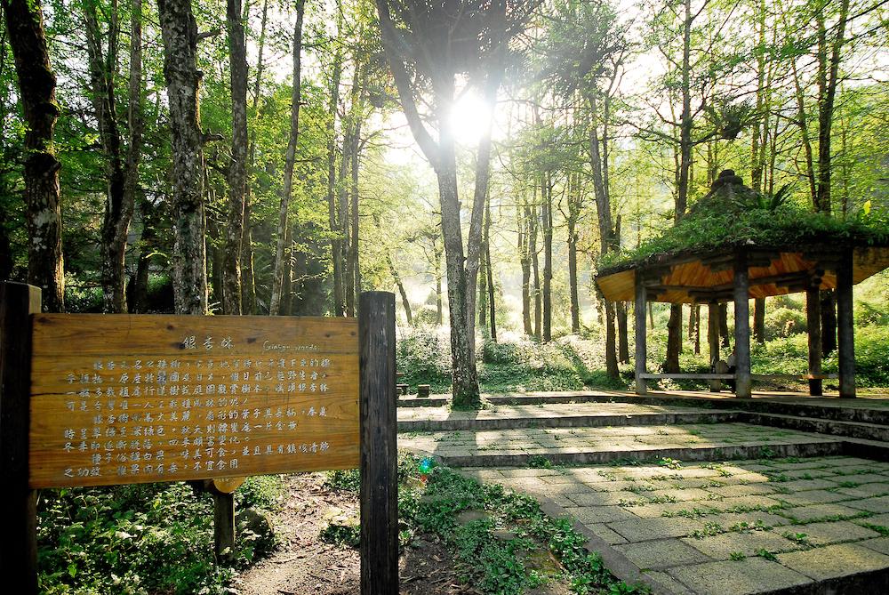 夏天涼爽旅行攻略,台灣人最愛5大森林避暑勝地