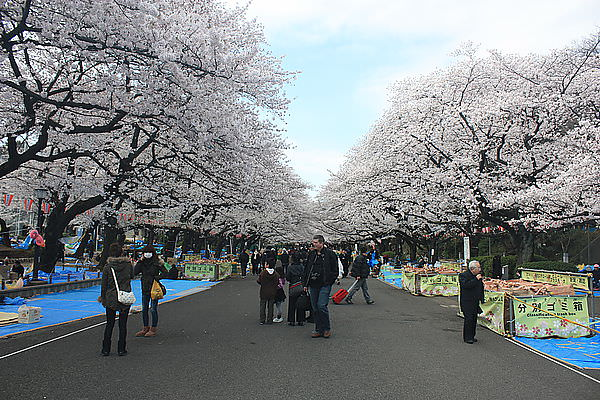DAY5-4.8.12。東京東北一人の櫻雪之旅。上野公園賞櫻