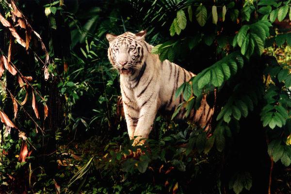 Zoo_HR_06.jpg