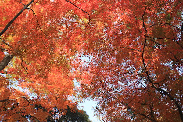 日本   嚴選京都9大紅葉景點,深秋來趟楓景之旅
